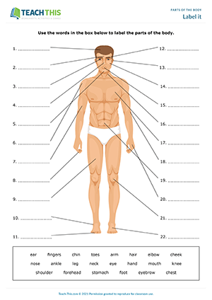 Parts Of The Body Esl Games Activities Worksheets
